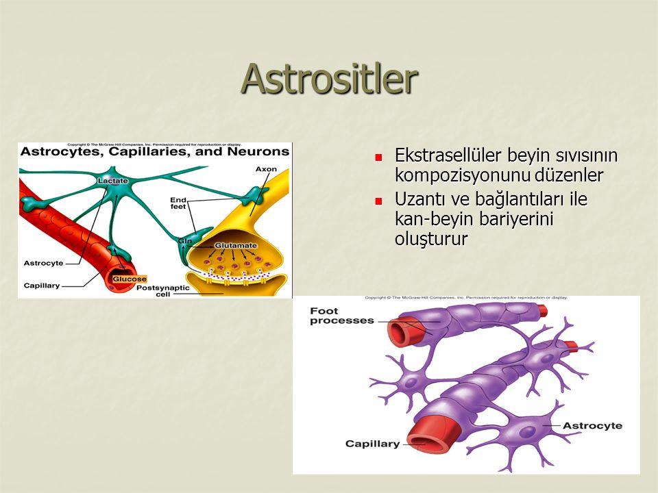 Astrositler Ekstrasellüler beyin sıvısının kompozisyonunu düzenler Ekstrasellüler beyin sıvısının kompozisyonunu düzenler Uzantı ve bağlantıları ile kan-beyin bariyerini oluşturur Uzantı ve bağlantıları ile kan-beyin bariyerini oluşturur