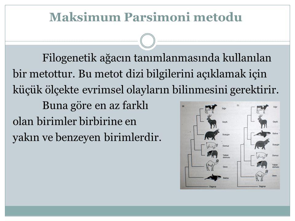 Maksimum Parsimoni metodu Filogenetik ağacın tanımlanmasında kullanılan bir metottur. Bu metot dizi bilgilerini açıklamak için küçük ölçekte evrimsel