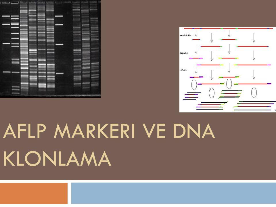Rekombinant DNA teknolojisi genelde, bir organizmadan elde edilen ve içinde istenilen geni taşıyan DNAparçalarının, taşıyıcı özellikte bir DNA molekülüne bağlanarak rekombinant DNA (cDNA) oluşturulması, rekombinant DNA moleküllerinin uygun bir konak hücreye sokularak orada çoğaltılmasını kapsayan bir süreci izlemektedir.organizmadangeniDNAcDNA Bu sürecin tanımlanmış bir DNA dizisinin yalıtımı (izolasyonu) ve daha sonrasında bunun birçok kopyasını in vivo koşullarda üretme aşamalarını kapsayan kısmı ise gen klonlamasıdır.yalıtımıin vivo Klonlama, çoğunlukla gen içeren DNA parçalarının kuvvetlendirilmesi için kullanılsa da, DNA nın promotorlar,kodlanmamış diziler, kimyasal sentezlenmiş oligo nükleotidler gibi kısımlarını ve nadiren kırılmış DNA yı kuvvetlendirmek için de kullanılabilir.kuvvetlendirilmesipromotorlarkodlanmamış diziler