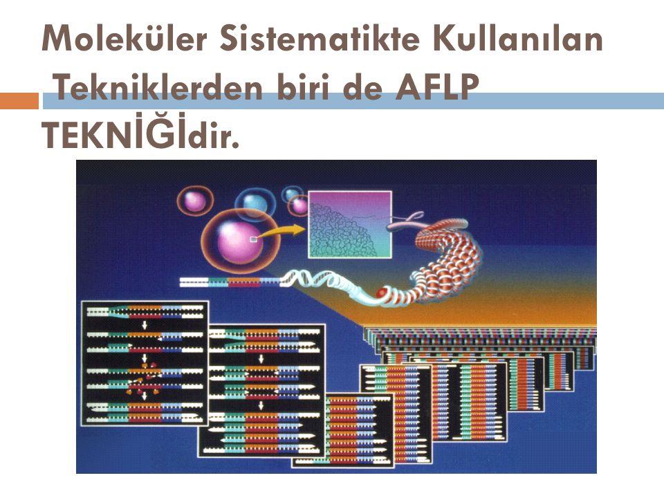 Amplified Fragment Length Polymorphism (AFLP) AFLP tekniği  RFLP tekniğinin kesme-tanıma kısımlarının PCR ile çoğaltılmasına dayalı bir DNA markır tekniğidir.