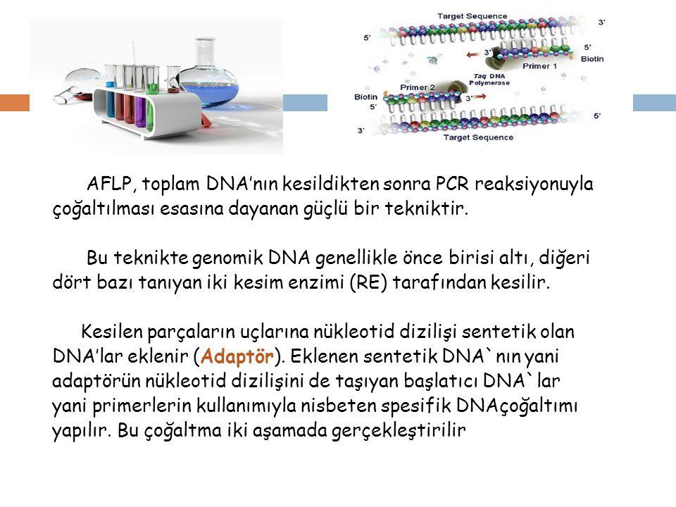 İlk aşamada her iki uçtan DNA kesim enzimlerinin tanıdığı diziden sonraki ilk nükleotide göre seçici çoğaltımın yapıldığı ön üretim yapılır.
