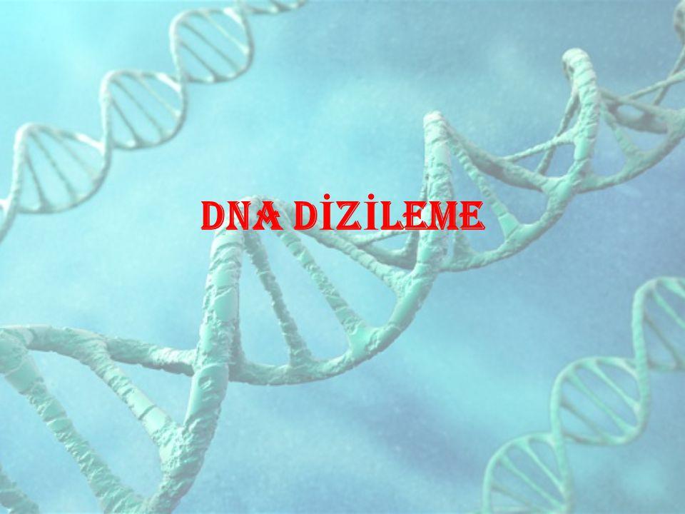 DNA D İ Z İ LEME