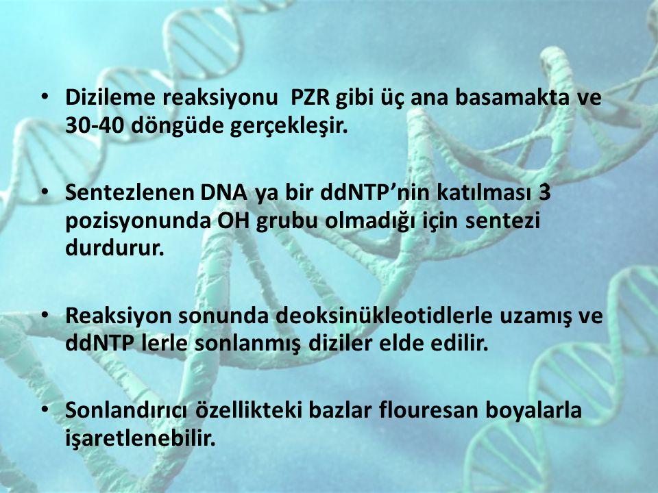 Dizileme reaksiyonu PZR gibi üç ana basamakta ve 30-40 döngüde gerçekleşir. Sentezlenen DNA ya bir ddNTP'nin katılması 3̀ pozisyonunda OH grubu olmadı