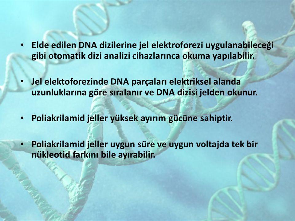 Elde edilen DNA dizilerine jel elektroforezi uygulanabileceği gibi otomatik dizi analizi cihazlarınca okuma yapılabilir. Jel elektoforezinde DNA parça