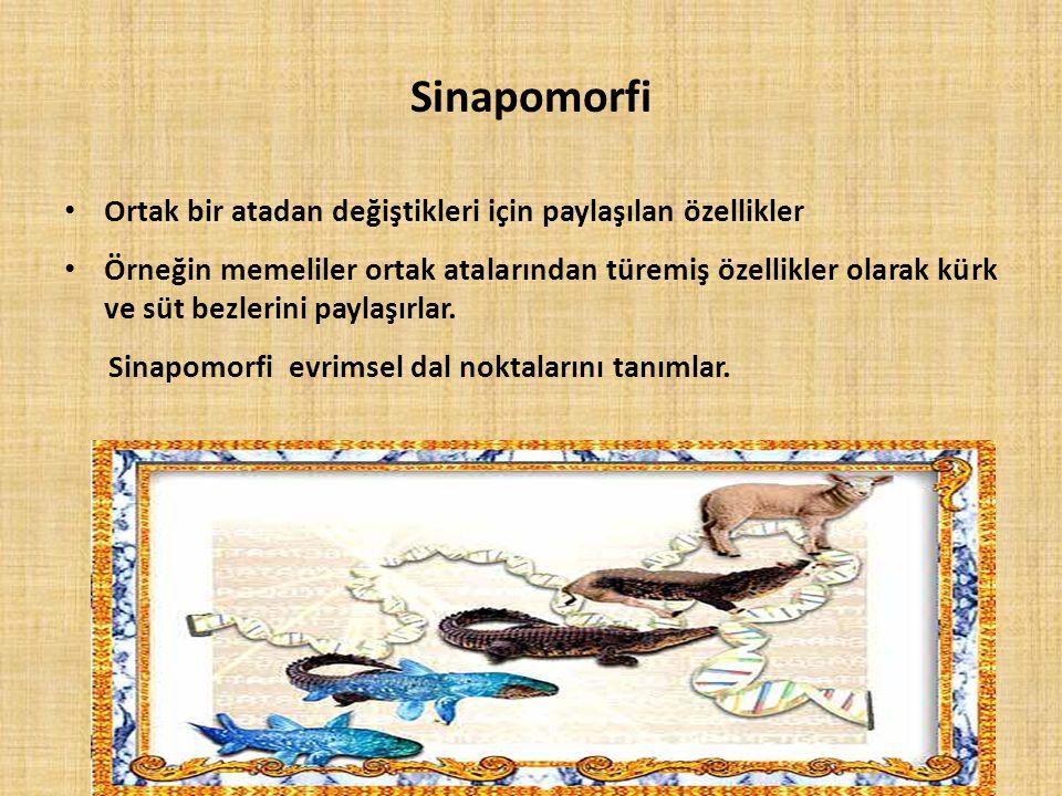 Sinapomorfi Ortak bir atadan değiştikleri için paylaşılan özellikler Örneğin memeliler ortak atalarından türemiş özellikler olarak kürk ve süt bezleri