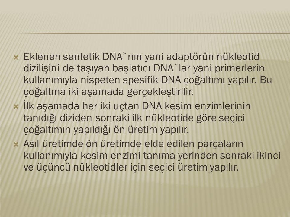  Eklenen sentetik DNA`nın yani adaptörün nükleotid dizilişini de taşıyan başlatıcı DNA`lar yani primerlerin kullanımıyla nispeten spesifik DNA çoğalt