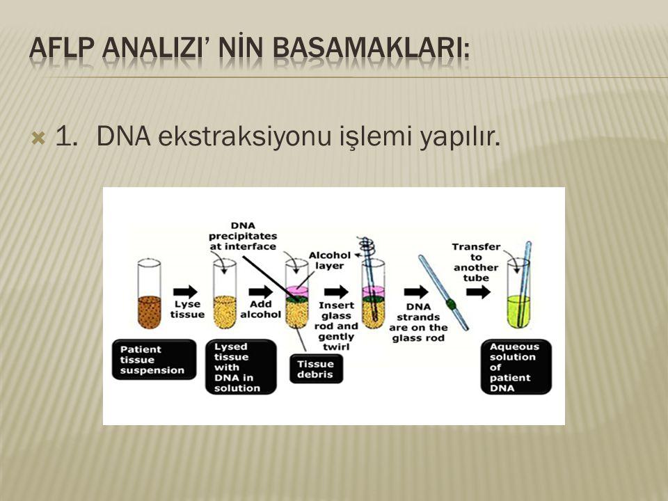  1.DNA ekstraksiyonu işlemi yapılır.