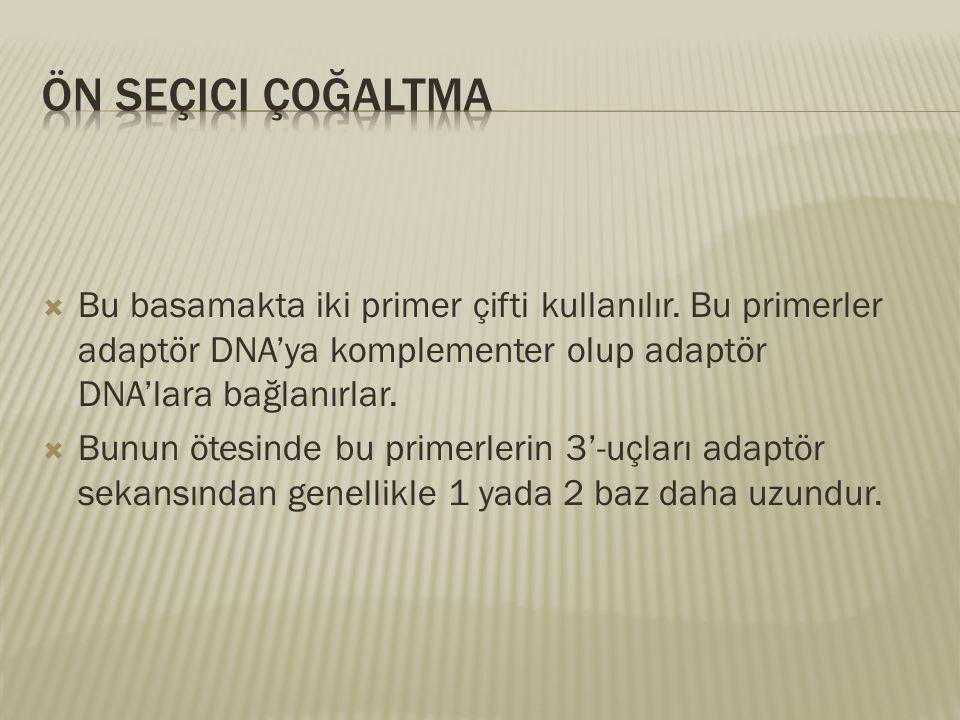 Bu basamakta iki primer çifti kullanılır. Bu primerler adaptör DNA'ya komplementer olup adaptör DNA'lara bağlanırlar.  Bunun ötesinde bu primerleri