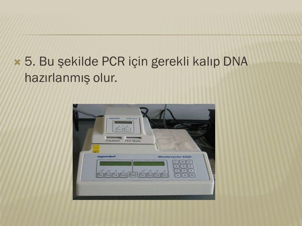  5. Bu şekilde PCR için gerekli kalıp DNA hazırlanmış olur.
