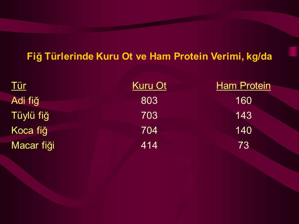 Fiğ Türlerinde Kuru Ot ve Ham Protein Verimi, kg/da TürKuru OtHam Protein Adi fiğ803160 Tüylü fiğ703143 Koca fiğ704140 Macar fiği41473