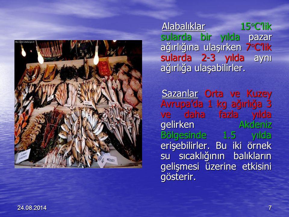 24.08.20147 Alabalıklar 15  C'lik sularda bir yılda pazar ağırlığına ulaşırken 7  C'lik sularda 2-3 yılda aynı ağırlığa ulaşabilirler.