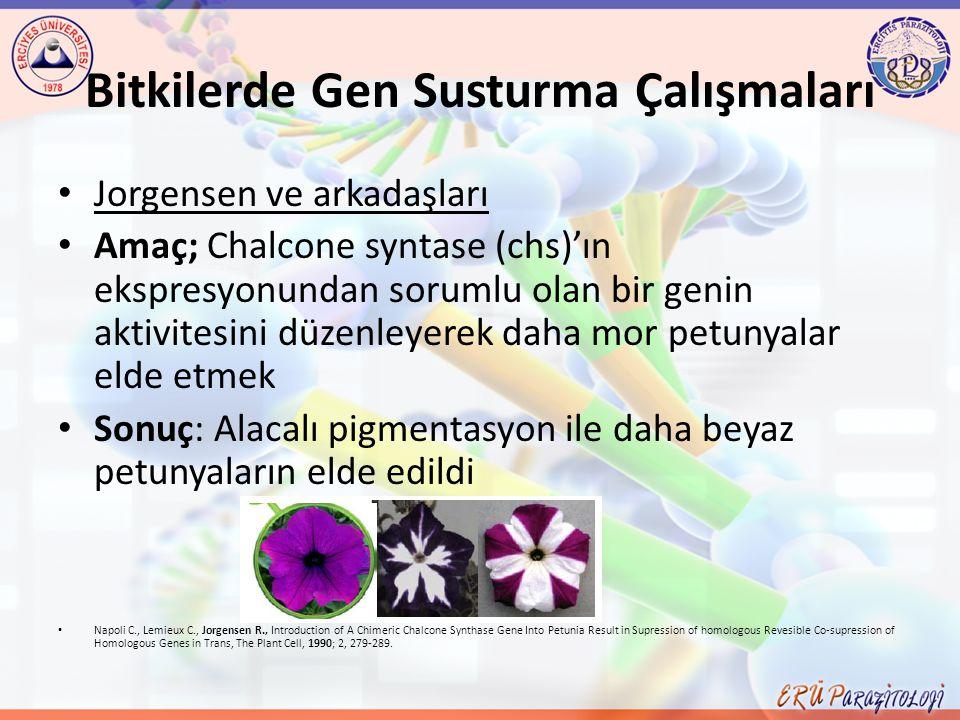 Bitkilerde Gen Susturma Çalışmaları Jorgensen ve arkadaşları Amaç; Chalcone syntase (chs)'ın ekspresyonundan sorumlu olan bir genin aktivitesini düzen