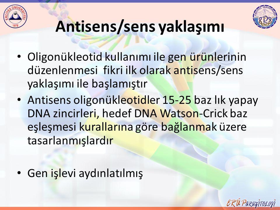 Antisens/sens yaklaşımı Oligonükleotid kullanımı ile gen ürünlerinin düzenlenmesi fikri ilk olarak antisens/sens yaklaşımı ile başlamıştır Antisens ol