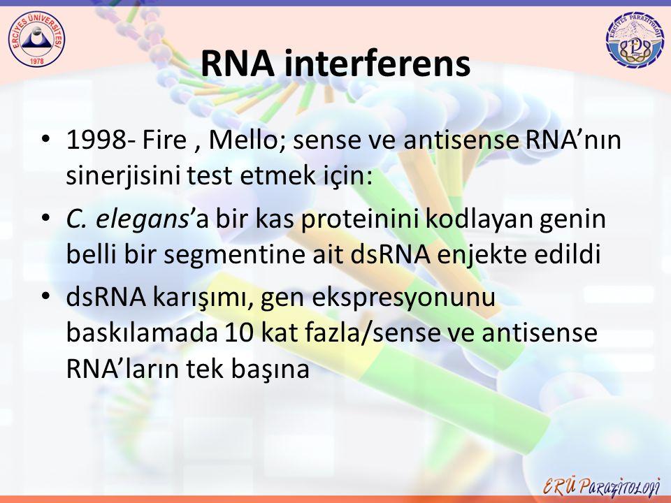 RNA interferens 1998- Fire, Mello; sense ve antisense RNA'nın sinerjisini test etmek için: C. elegans'a bir kas proteinini kodlayan genin belli bir se