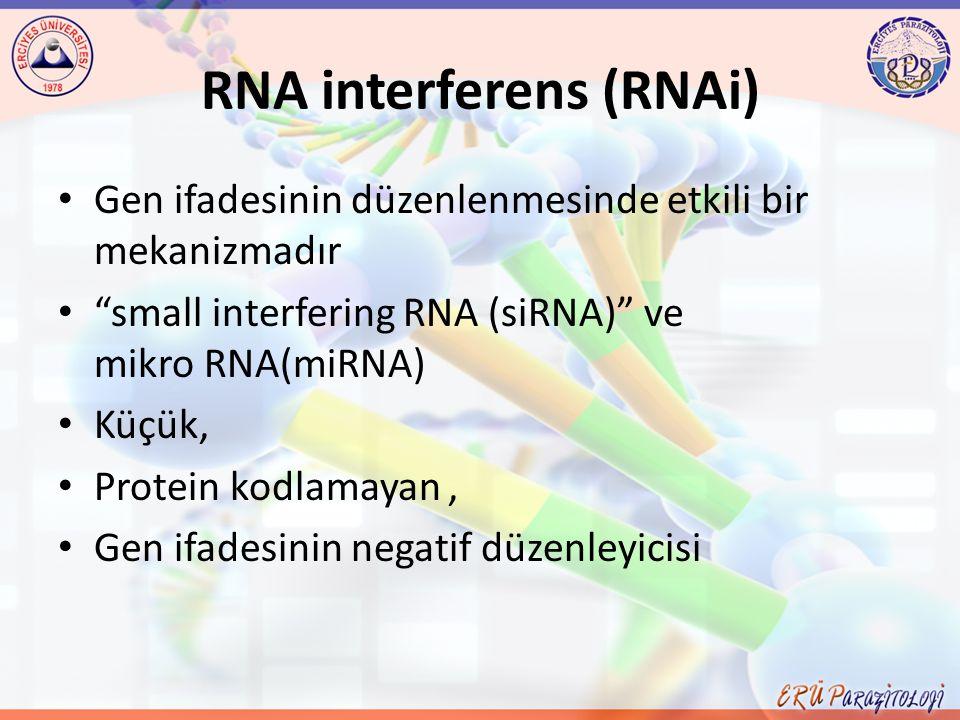 "RNA interferens (RNAi) Gen ifadesinin düzenlenmesinde etkili bir mekanizmadır ""small interfering RNA (siRNA)"" ve mikro RNA(miRNA) Küçük, Protein kodla"