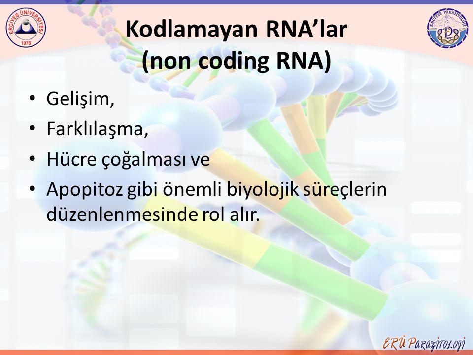 Kodlamayan RNA'lar (non coding RNA) Gelişim, Farklılaşma, Hücre çoğalması ve Apopitoz gibi önemli biyolojik süreçlerin düzenlenmesinde rol alır.