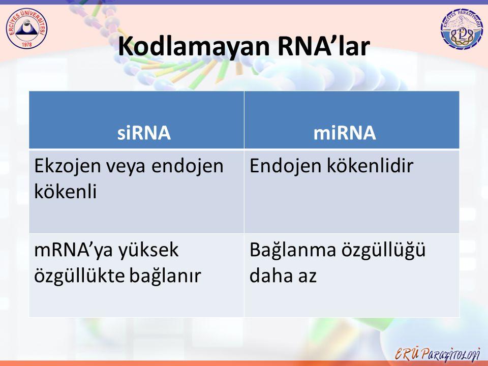 Kodlamayan RNA'lar siRNA miRNA Ekzojen veya endojen kökenli Endojen kökenlidir mRNA'ya yüksek özgüllükte bağlanır Bağlanma özgüllüğü daha az