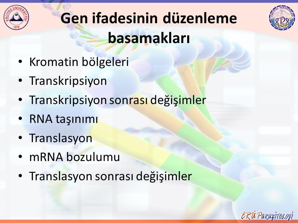 Gen ve Protein Genler; transkripsiyonel ve post-transkripsiyonel olarak düzenlenir