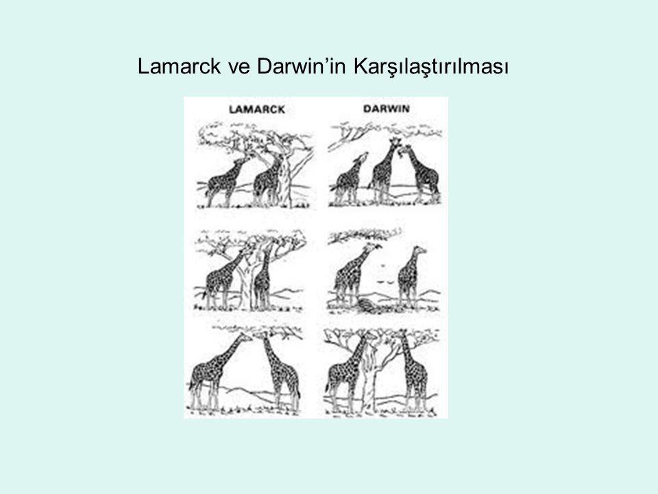 Lamarck ve Darwin'in Karşılaştırılması