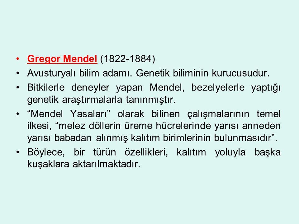 Gregor Mendel (1822-1884) Avusturyalı bilim adamı. Genetik biliminin kurucusudur. Bitkilerle deneyler yapan Mendel, bezelyelerle yaptığı genetik araşt