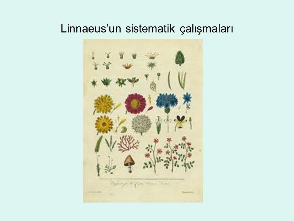 Linnaeus'un sistematik çalışmaları