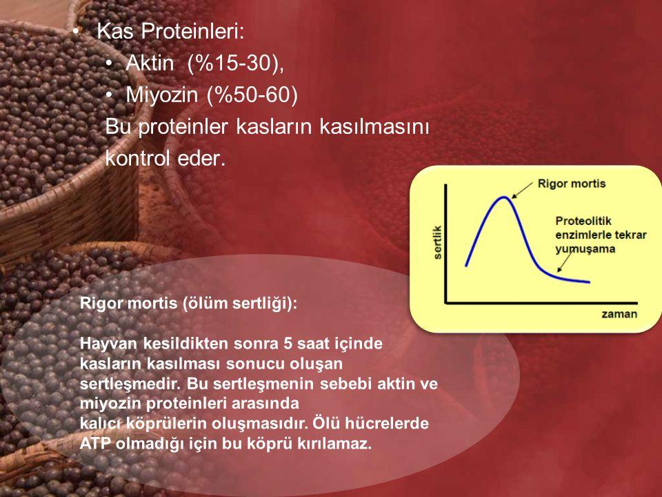 Kas Proteinleri: Aktin (%15-30), Miyozin (%50-60) Bu proteinler kasların kasılmasını kontrol eder.