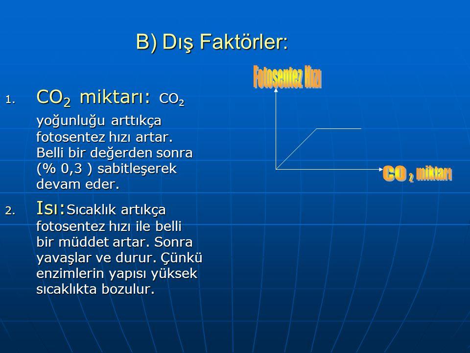 FOTOSENTEZ HIZINA ETKİ EDEN FAKTÖRLER A) İÇ FAKTÖRLER: 1. Yaprak yüzeyinin genişliği 2. Klorofil miktarı (Kloroplast sayısı) 3. Stoma sayısı 4. Enziml