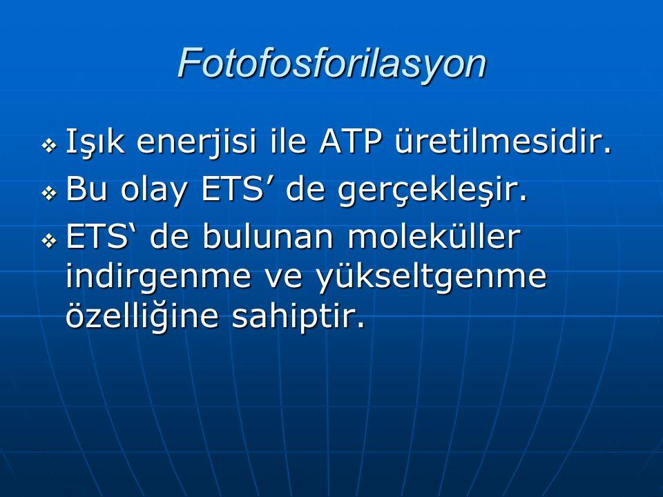 Fotofosforilasyon IIIIşık enerjisi ile ATP üretilmesidir.