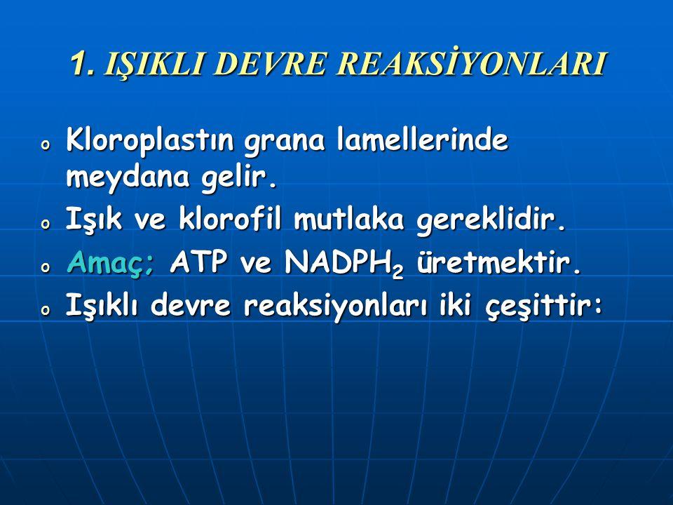 REAKSİYON BASAMAKLARI 1.