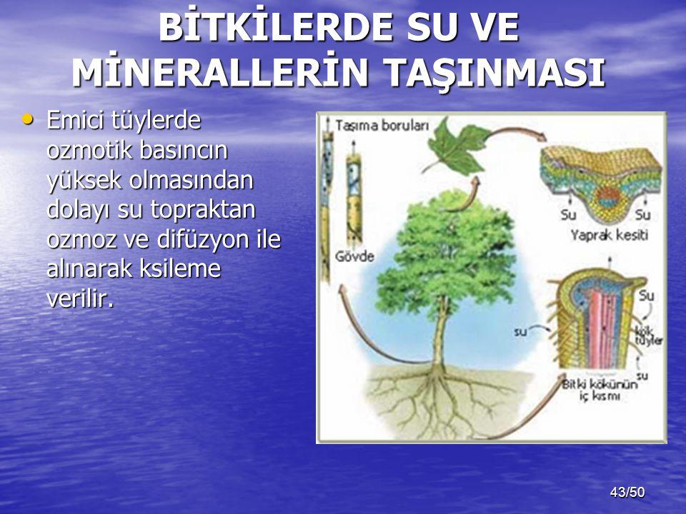 43/50 BİTKİLERDE SU VE MİNERALLERİN TAŞINMASI Emici tüylerde ozmotik basıncın yüksek olmasından dolayı su topraktan ozmoz ve difüzyon ile alınarak ksileme verilir.
