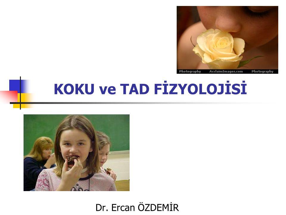 Giriş Koku ve tad, gastrointestinal fonksiyonla yakın işbirliği nedeniyle genellikle visseral duyular olarak sınıflandırılırlar Fizyolojik olarak bu iki duyu birbiriyle ilişkilidir Değişik gıdaların lezzetleri büyük ölçüde bunların tad ve kokularının bir karmasıdır Sonuç olarak, kişide koku duyusunu baskılayan soğuk algınlığı gibi bir olay varsa besinlerden farklı tad alınabilir Koku moleküllerini ayırt etmede hayli eğitimli olan parfümcüler 5000 değişik çeşit koku molekülünü, şarap tadıcıları ise tad ve aromaya dayanan 100'den fazla farklı tad bileşenlerini ayırt edebiirler Koku moleküllerini ayırt etmede hayli eğitimli olan parfümcüler 5000 değişik çeşit koku molekülünü, şarap tadıcıları ise tad ve aromaya dayanan 100'den fazla farklı tad bileşenlerini ayırt edebiirler