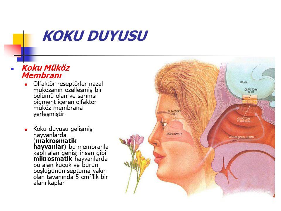 Anomaliler Koku anomalileri arasında; Anosmi (koku duyusunun yokluğu), Hiposmi (koku duyarlılığının azalması) ve Disosmi (koku duyusunun çarpılması) bulunmaktadır Kakosmi denen hoş olmayan koku halusinasyonları da epileptik nöbetler sonucu gelişebilir İnsanda düzinelerce birbirinden farklı anosmiler saptanmış olup olasılıkla bunlar her olguda koku reseptör ailesinin çok sayıdaki üyesinden bir tanesinin yokluğu veya fonksiyonunun çarpılmış olmasına bağlıdır Yaşın ilerlemesiyle koku eşiği yükselir ve 80 yaşını aşmış insanların %75'inden fazlasında kokuları tanıma yeteneğinde bozulma görülür
