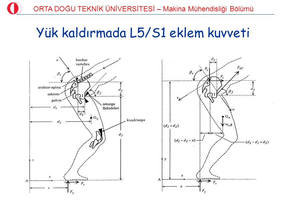 ORTA DOĞU TEKNİK ÜNİVERSİTESİ – Makina Mühendisliği Bölümü Tibia'daki gerilmeler  a-a kesitinde iletilen yük: Vücut ağırlığının 4,5 katı  a-a kesitindeki gerilme: Akma sınırı/2 ; Kırılma sınırı/3  Van Buskirk (1991): Tibia boyunca düzgün gerilme dağılımı !