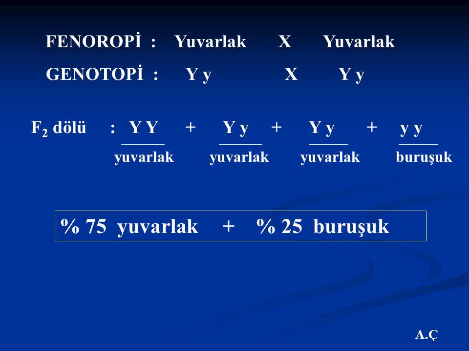 A.Ç FENOROPİ : Yuvarlak X Yuvarlak GENOTOPİ : Y y X Y y F 2 dölü : Y Y + Y y + Y y + y y % 75 yuvarlak + % 25 buruşuk yuvarlak yuvarlak yuvarlak buruşuk