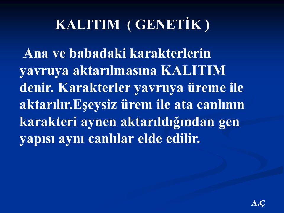 A.Ç KALITIM ( GENETİK ) Ana ve babadaki karakterlerin yavruya aktarılmasına KALITIM denir.
