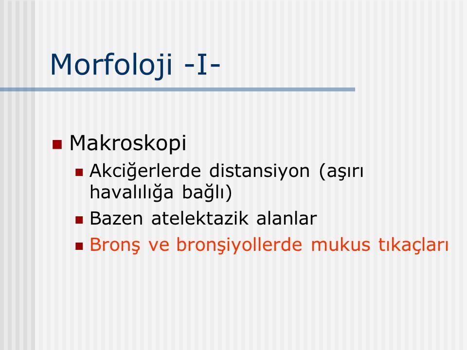 Morfoloji -I- Makroskopi Akciğerlerde distansiyon (aşırı havalılığa bağlı) Bazen atelektazik alanlar Bronş ve bronşiyollerde mukus tıkaçları