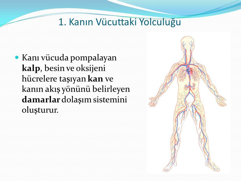 1. Kanın Vücuttaki Yolculuğu Kanı vücuda pompalayan kalp, besin ve oksijeni hücrelere taşıyan kan ve kanın akış yönünü belirleyen damarlar dolaşım sis