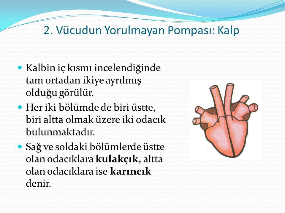 2. Vücudun Yorulmayan Pompası: Kalp Kalbin iç kısmı incelendiğinde tam ortadan ikiye ayrılmış olduğu görülür. Her iki bölümde de biri üstte, biri altt