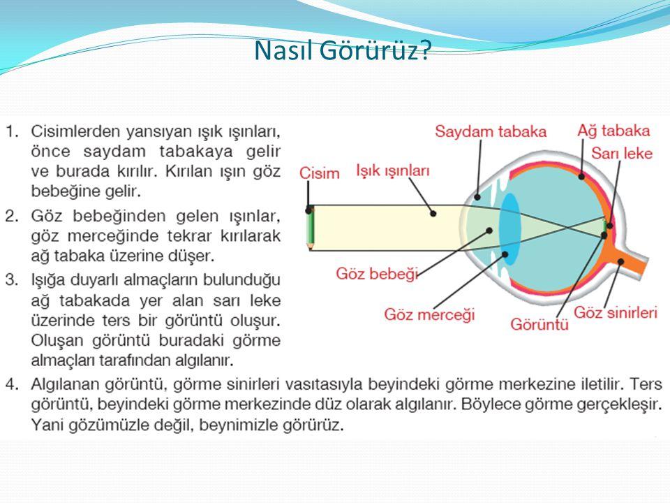 Göz Kusurları ve Bu Kusurların Tedavi Yolları Renk körlüğü (Daltonizm): Genellikle kırmızı ve yeşil renklerin birbirinden ayırt edilemediği bir göz kusurudur.