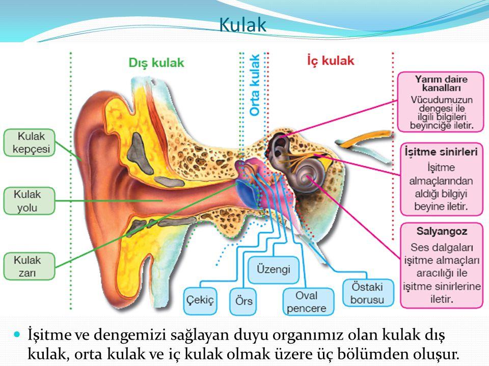 İşitme Bozuklukları ve Tedavi Yolları Kulağımız, kulak yolundaki kıllar ile birlikte kulağa giren toz vb.
