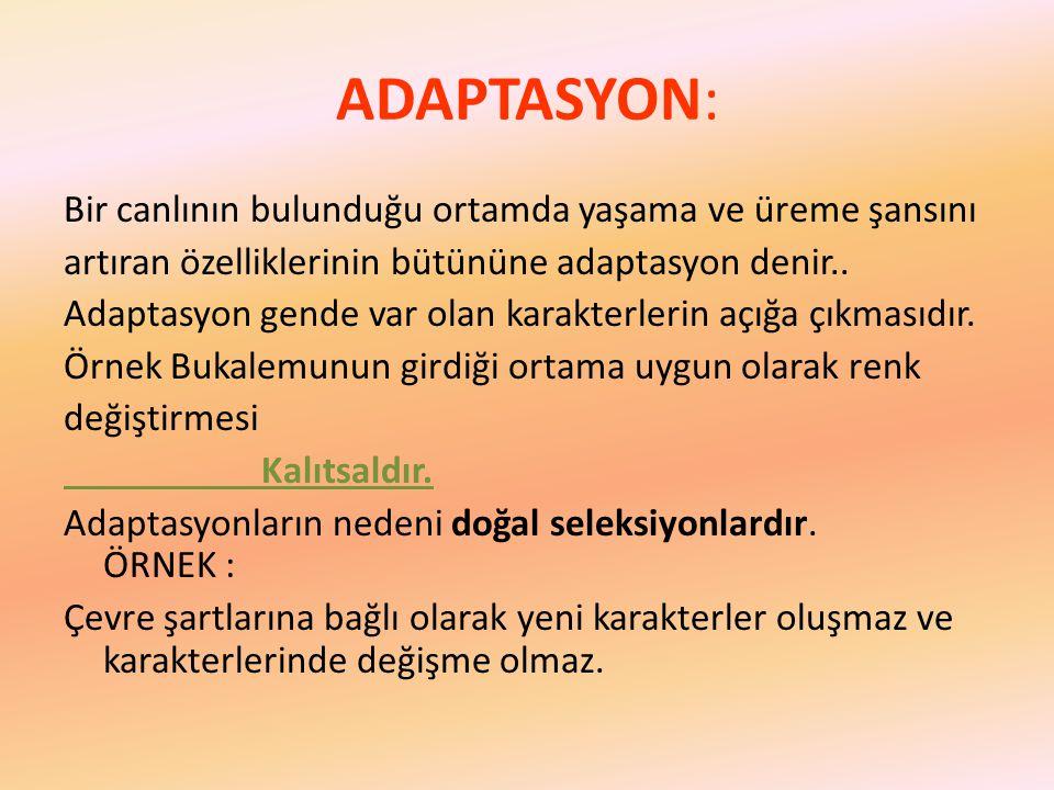 ADAPTASYON: Bir canlının bulunduğu ortamda yaşama ve üreme şansını artıran özelliklerinin bütününe adaptasyon denir..