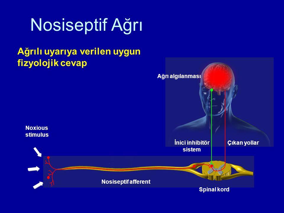 Nosiseptif Ağrı Nosiseptif afferent Noxious stimulus İnici inhibitör sistem Çıkan yollar Spinal kord Ağrı algılanması Ağrılı uyarıya verilen uygun fiz