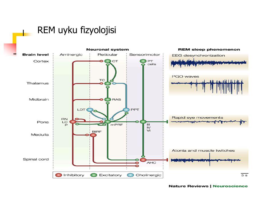 REM uyku fizyolojisi