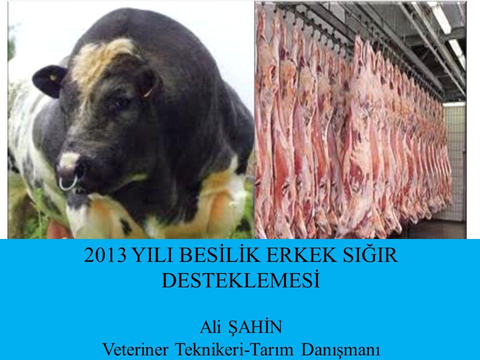 2013 YILI BESİLİK ERKEK SIĞIR DESTEKLEMESİ Ali ŞAHİN Veteriner Teknikeri-Tarım Danışmanı
