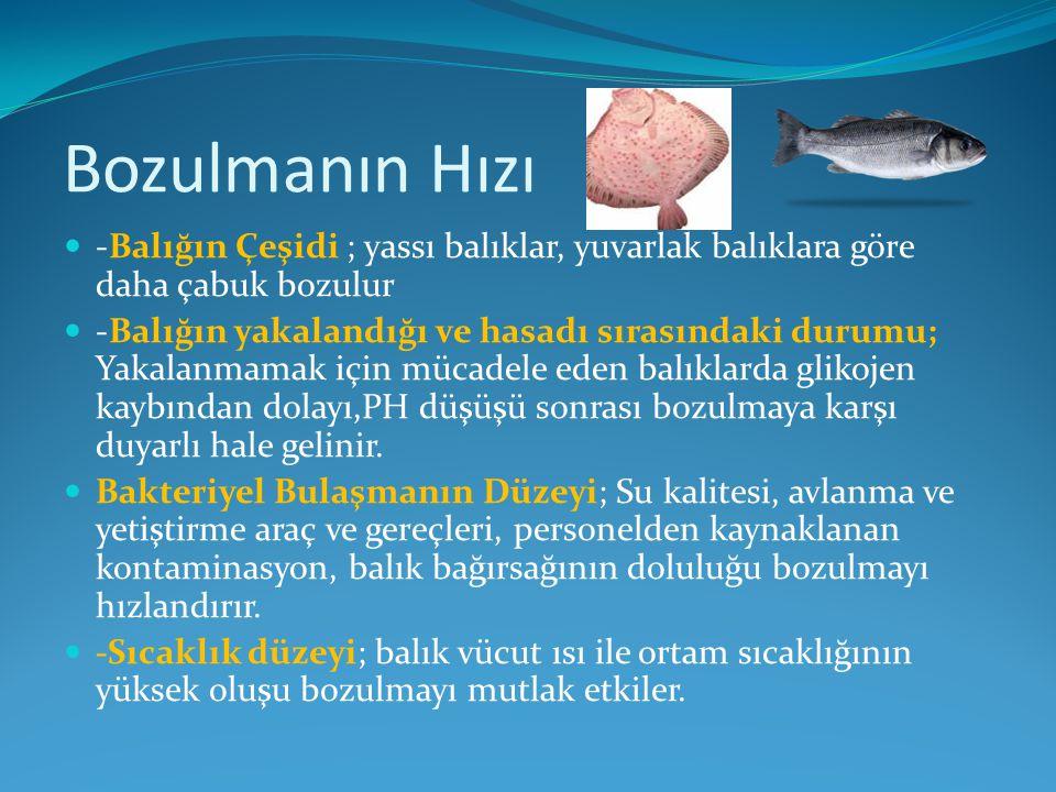 Bozulmanın Hızı -Balığın Çeşidi ; yassı balıklar, yuvarlak balıklara göre daha çabuk bozulur -Balığın yakalandığı ve hasadı sırasındaki durumu; Yakala