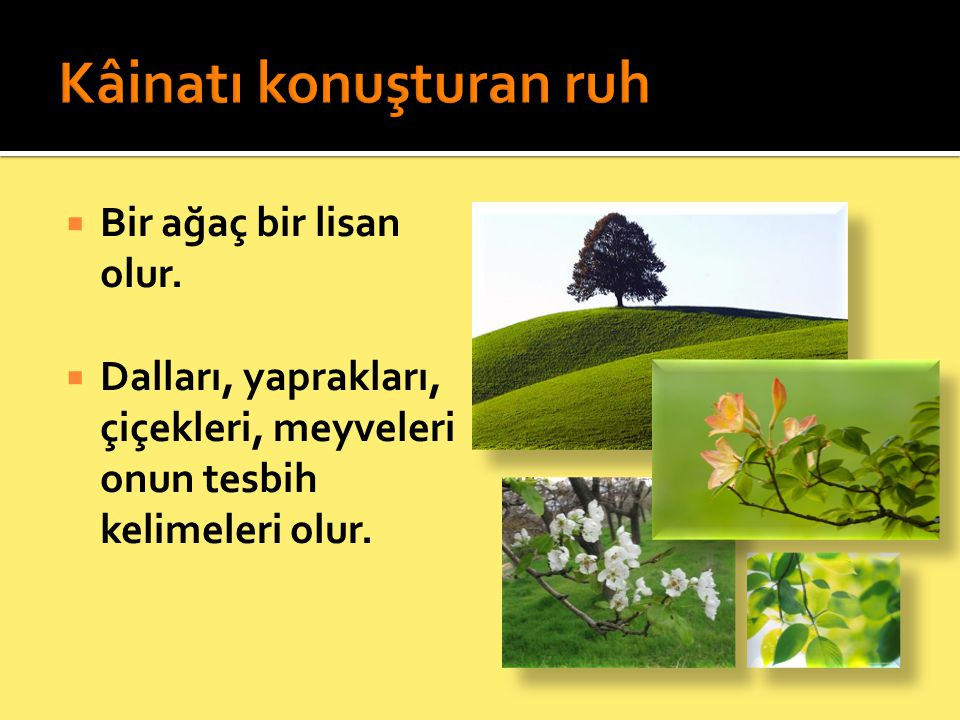  Bir ağaç bir lisan olur.  Dalları, yaprakları, çiçekleri, meyveleri onun tesbih kelimeleri olur.
