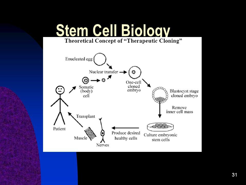 31 Stem Cell Biology