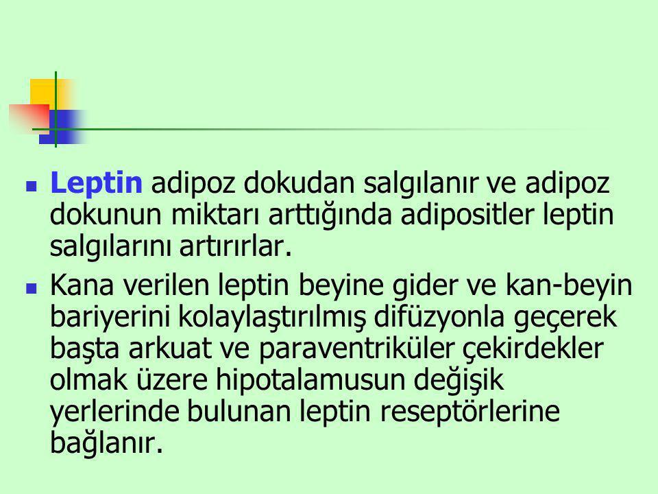 Leptin adipoz dokudan salgılanır ve adipoz dokunun miktarı arttığında adipositler leptin salgılarını artırırlar. Kana verilen leptin beyine gider ve k