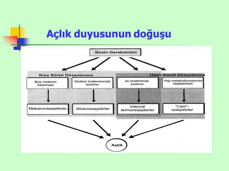 Leptin Salgısını Artıranlar Leptin Salgısını Azaltanlar İnsülin Katekolaminler (B 3 üzerinden) GlikokortikoitlerSempatik aktivite OstrojenCCk Büyüme Hormonu Sekretin Gastrin LEPTİN SALINIMININ DÜZENLENMESİ