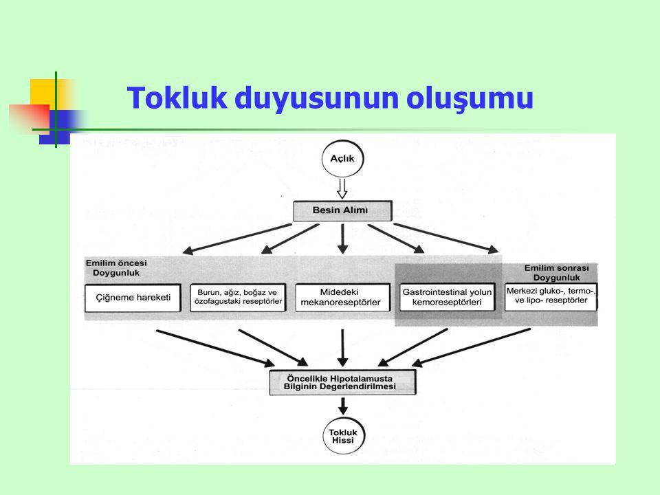 BESLENMEYİ AZALTANLARBESLENMEYİ ARTIRANLAR SerotoninNöropeptid Y NörepinefrinMelanin konsantre edici hormon Alfa-MSHOreksinler CRHEndorfinler LeptinGalanin İnsülinAminoasitler(Glutamat, gama-aminobütirik asit) KolesistokininKortizol Enterostatin Glukagon benzeri peptid HİPOTALAMUSTAKİ BESLENME VE TOKLUK MERKEZLERİNİ ETKİLEYEN HORMON VE NÖROTRANSMİTTERLER